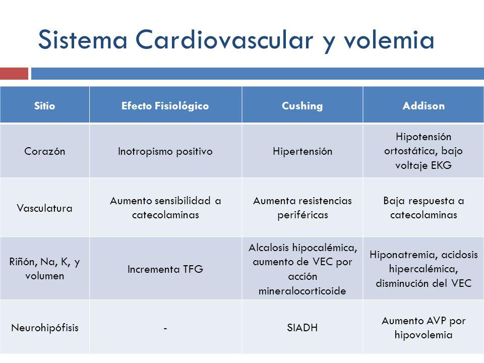 Sistema Cardiovascular y volemia