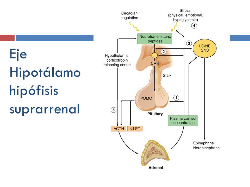 Eje Hipotálamo hipófisis suprarrenal