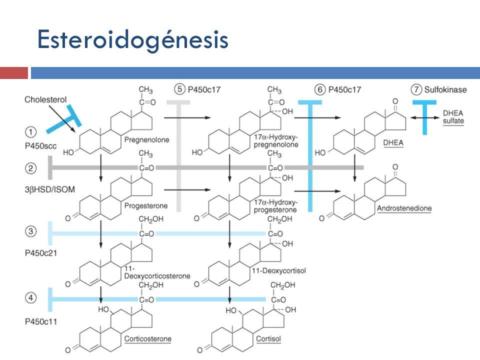 Esteroidogénesis