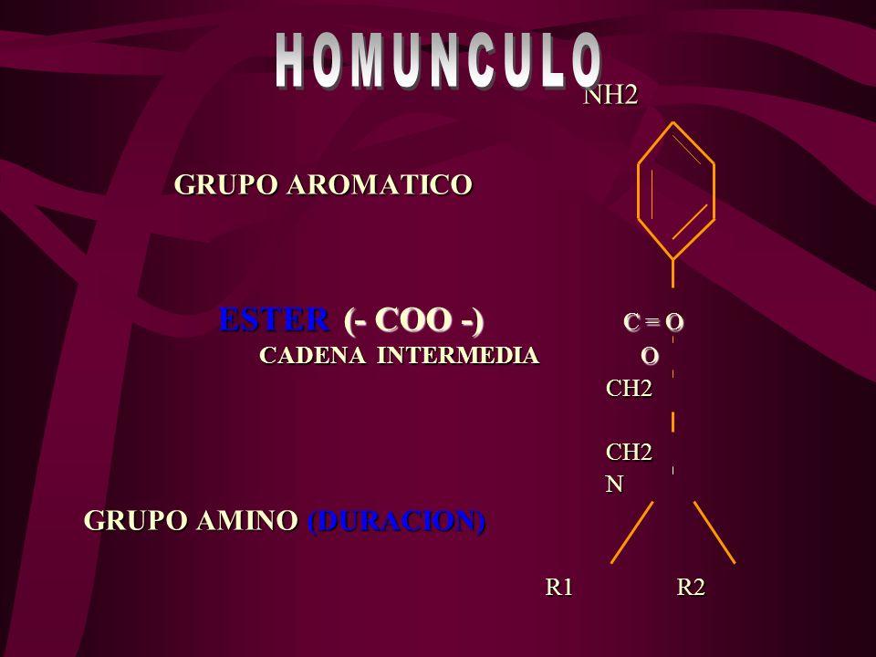 HOMUNCULO NH2 GRUPO AROMATICO ESTER (- COO -) C = O