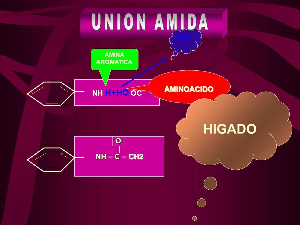 UNION AMIDA HIGADO H2O AMINOACIDO NH H+HO OC O NH – C – CH2
