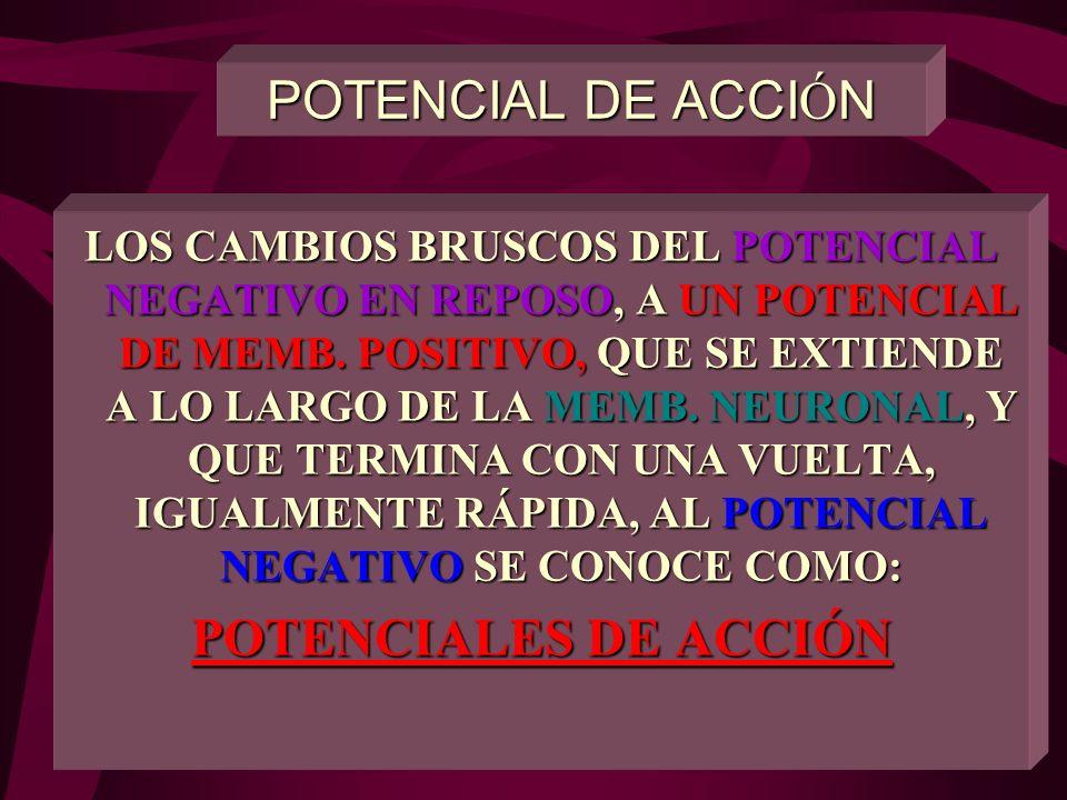 POTENCIAL DE ACCIÓN POTENCIALES DE ACCIÓN