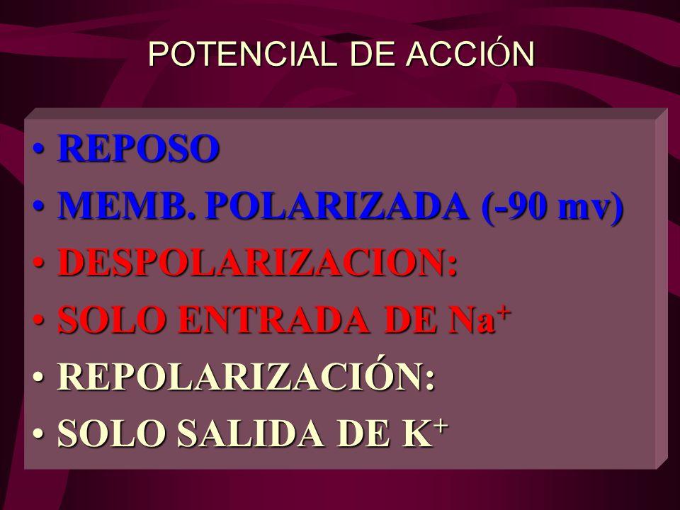 REPOSO MEMB. POLARIZADA (-90 mv) DESPOLARIZACION: SOLO ENTRADA DE Na+
