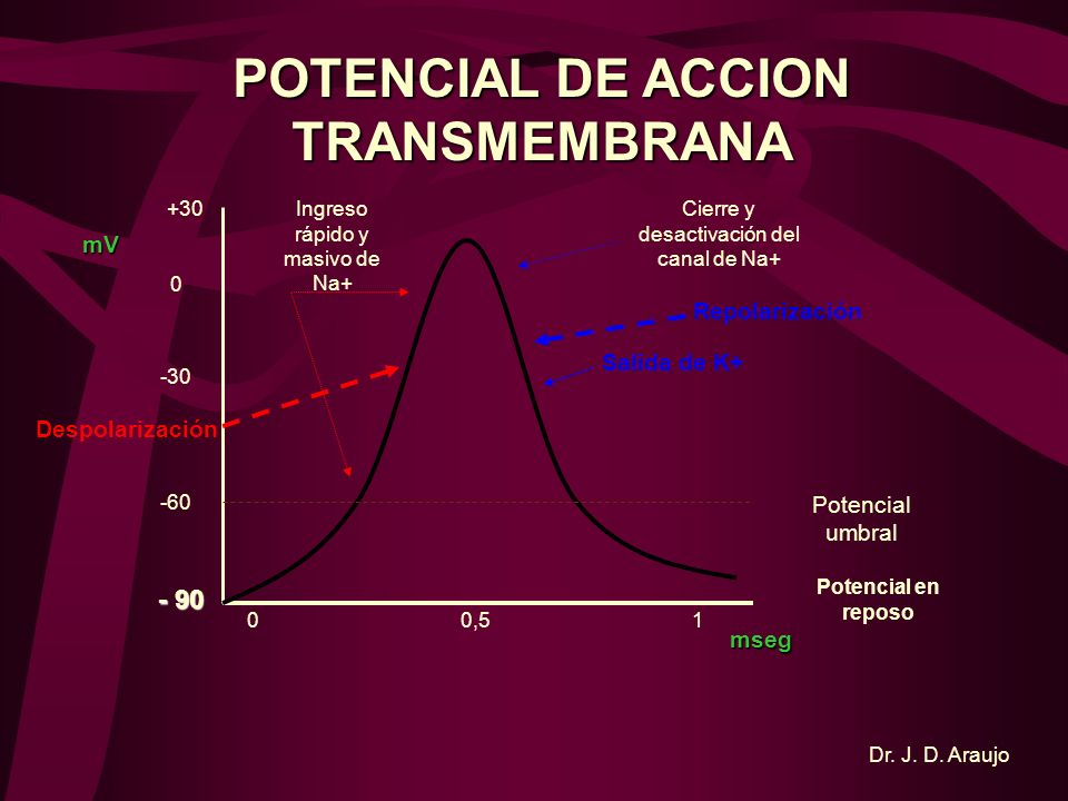 POTENCIAL DE ACCION TRANSMEMBRANA