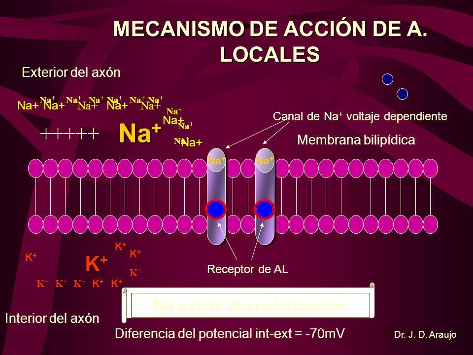 MECANISMO DE ACCIÓN DE A. LOCALES