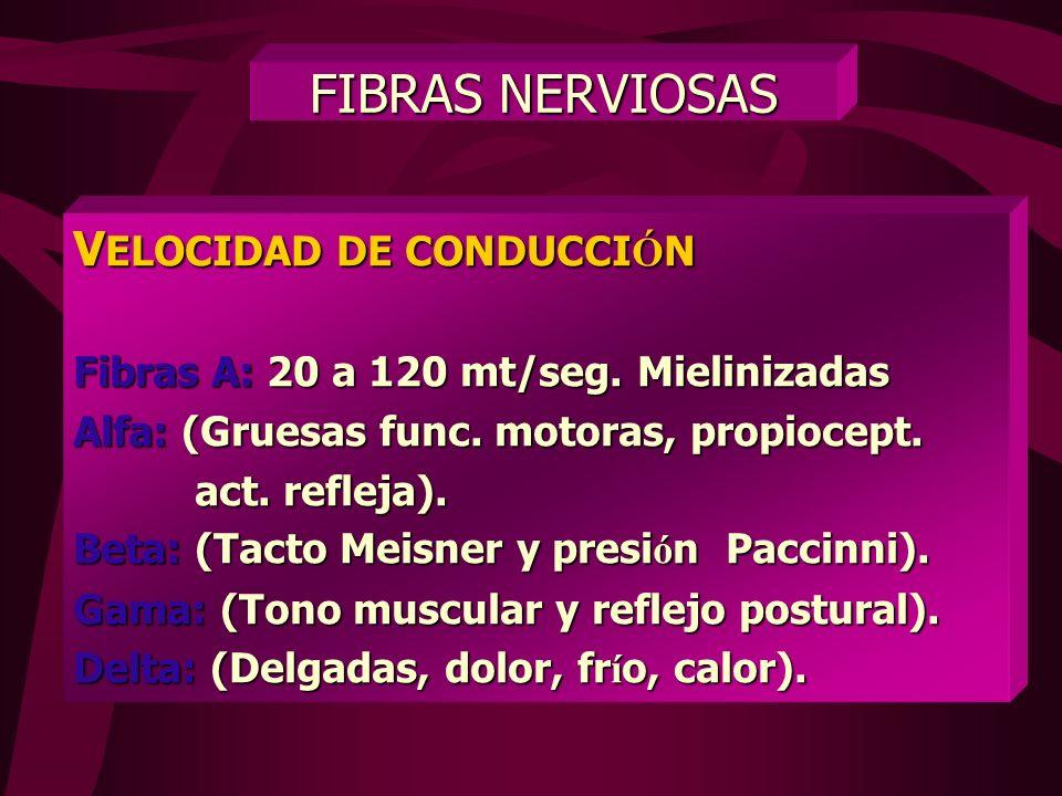 FIBRAS NERVIOSAS VELOCIDAD DE CONDUCCIÓN