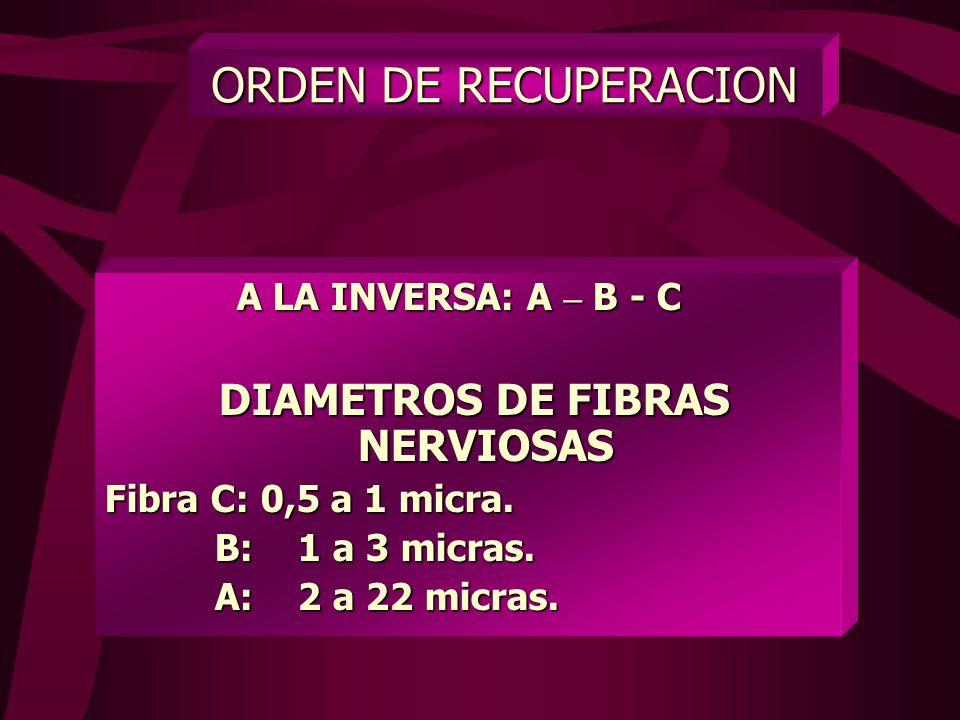 DIAMETROS DE FIBRAS NERVIOSAS