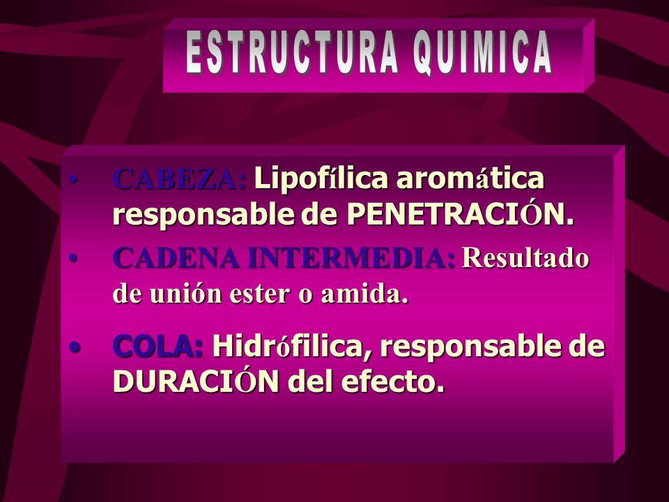 ESTRUCTURA QUIMICA CABEZA: Lipofílica aromática responsable de PENETRACIÓN. CADENA INTERMEDIA: Resultado de unión ester o amida.