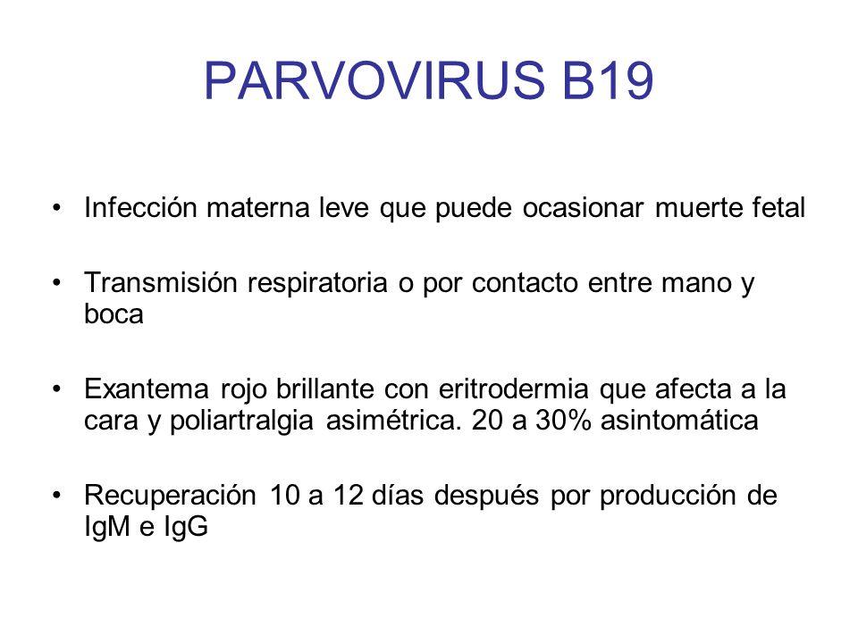 PARVOVIRUS B19 Infección materna leve que puede ocasionar muerte fetal