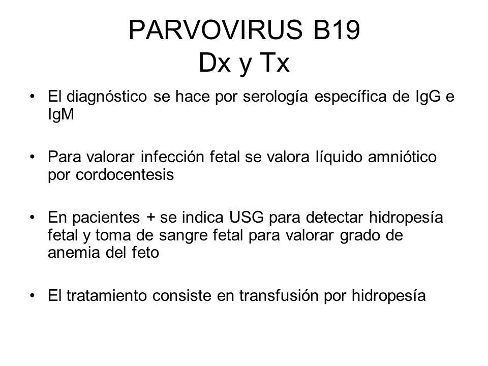 PARVOVIRUS B19 Dx y Tx El diagnóstico se hace por serología específica de IgG e IgM.
