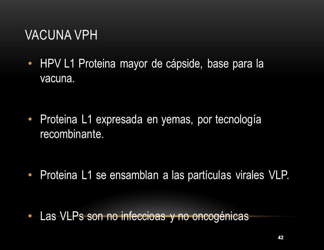 Vacuna VPH HPV L1 Proteina mayor de cápside, base para la vacuna.
