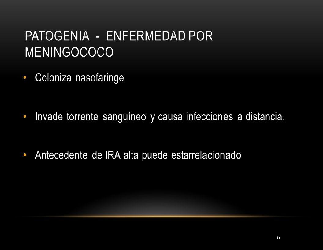 Patogenia - Enfermedad por meningococo