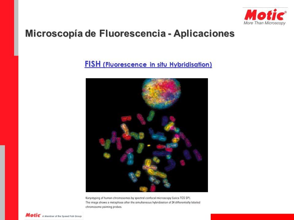 FISH (Fluorescence in situ Hybridisation)