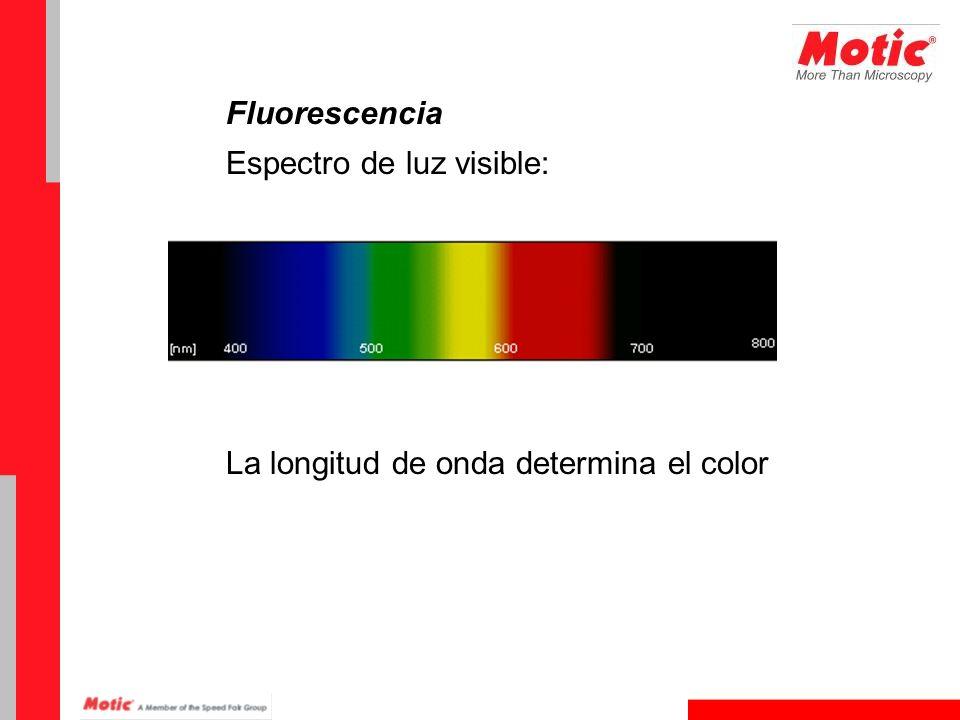 Fluorescencia Espectro de luz visible: La longitud de onda determina el color