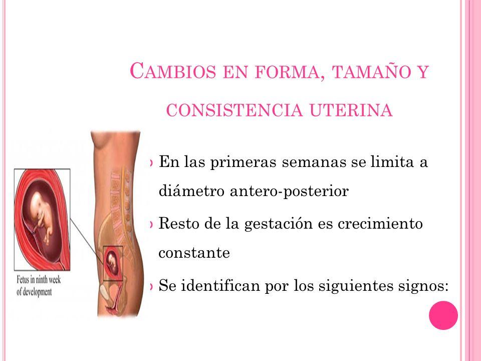 Cambios en forma, tamaño y consistencia uterina