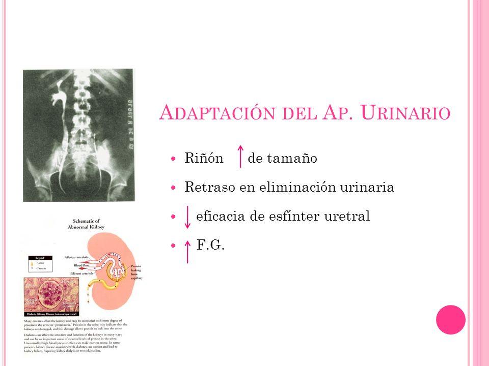 Adaptación del Ap. Urinario