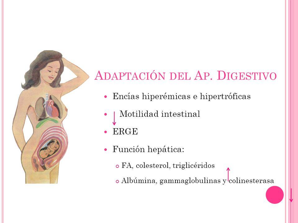 Adaptación del Ap. Digestivo