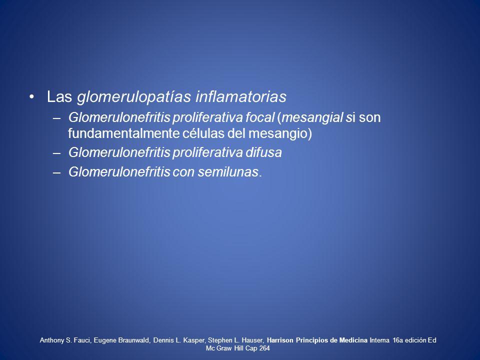 Las glomerulopatías inflamatorias