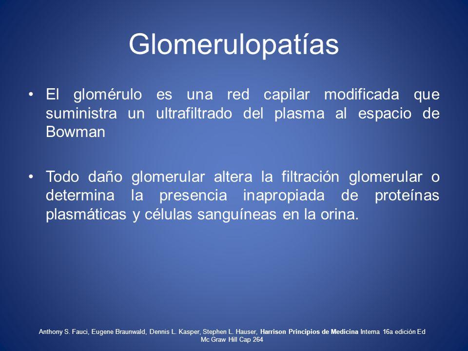 Glomerulopatías El glomérulo es una red capilar modificada que suministra un ultrafiltrado del plasma al espacio de Bowman.
