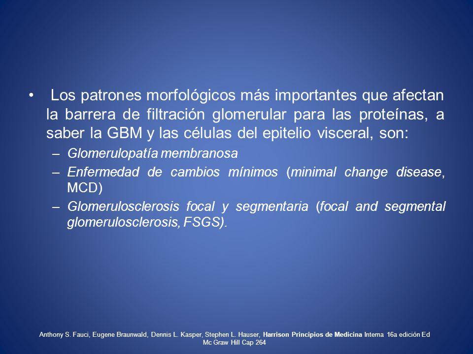 Los patrones morfológicos más importantes que afectan la barrera de filtración glomerular para las proteínas, a saber la GBM y las células del epitelio visceral, son: