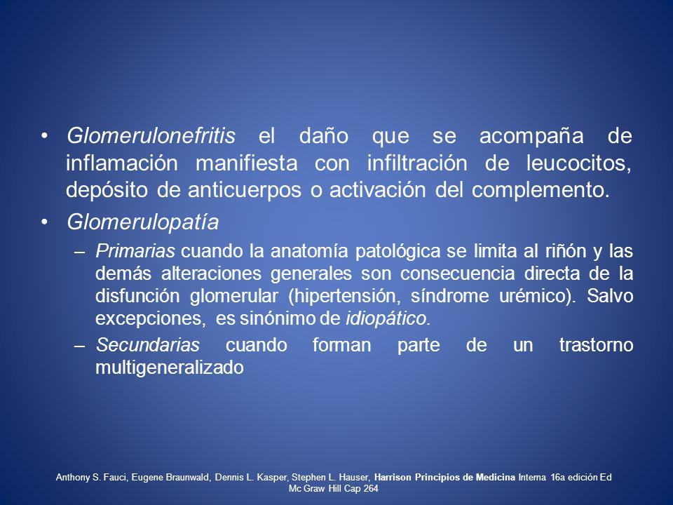 Glomerulonefritis el daño que se acompaña de inflamación manifiesta con infiltración de leucocitos, depósito de anticuerpos o activación del complemento.