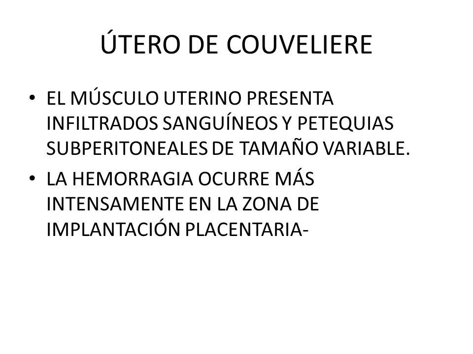 ÚTERO DE COUVELIEREEL MÚSCULO UTERINO PRESENTA INFILTRADOS SANGUÍNEOS Y PETEQUIAS SUBPERITONEALES DE TAMAÑO VARIABLE.