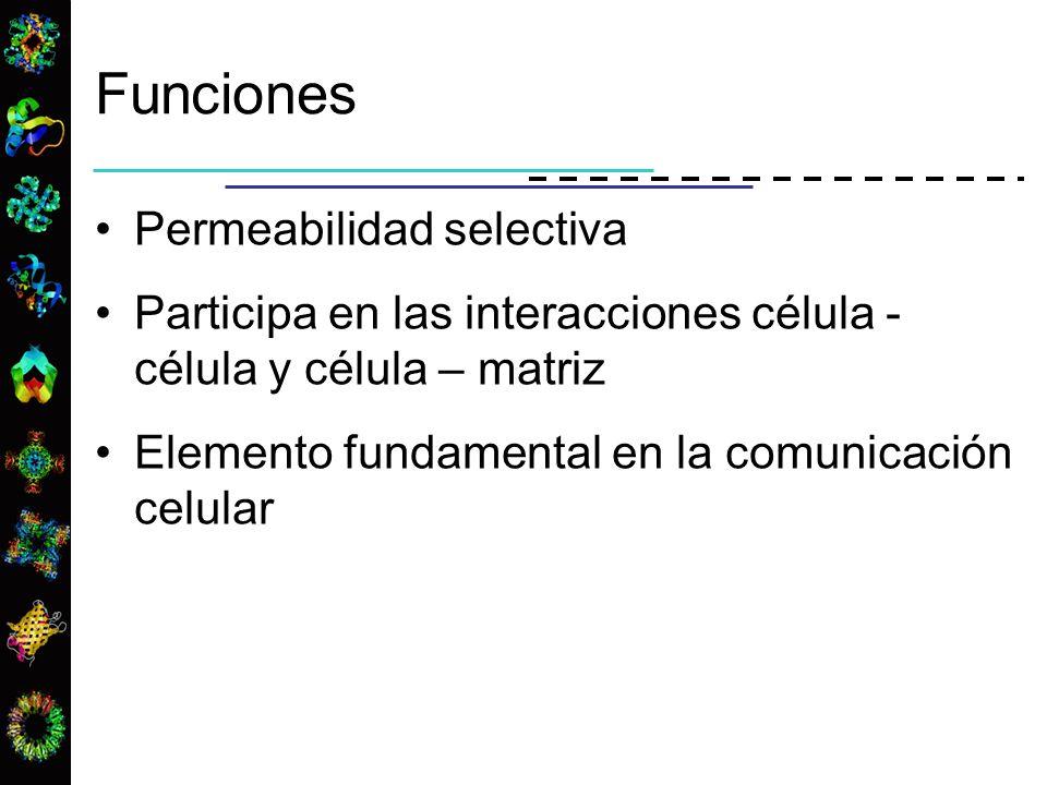 Funciones Permeabilidad selectiva