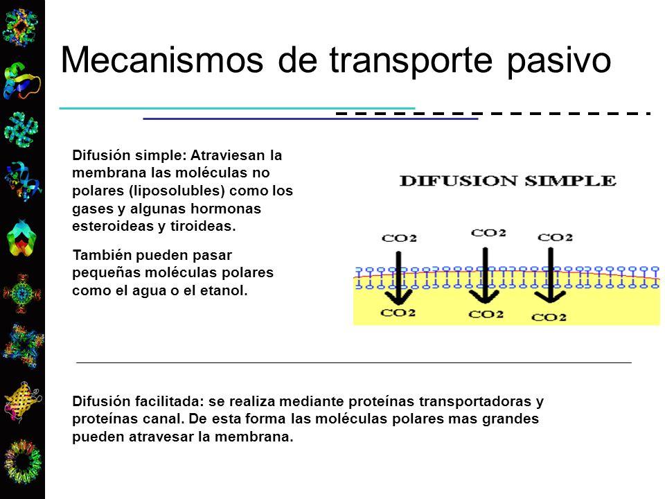 Mecanismos de transporte pasivo
