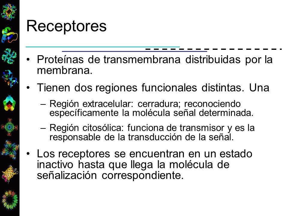 Receptores Proteínas de transmembrana distribuidas por la membrana.