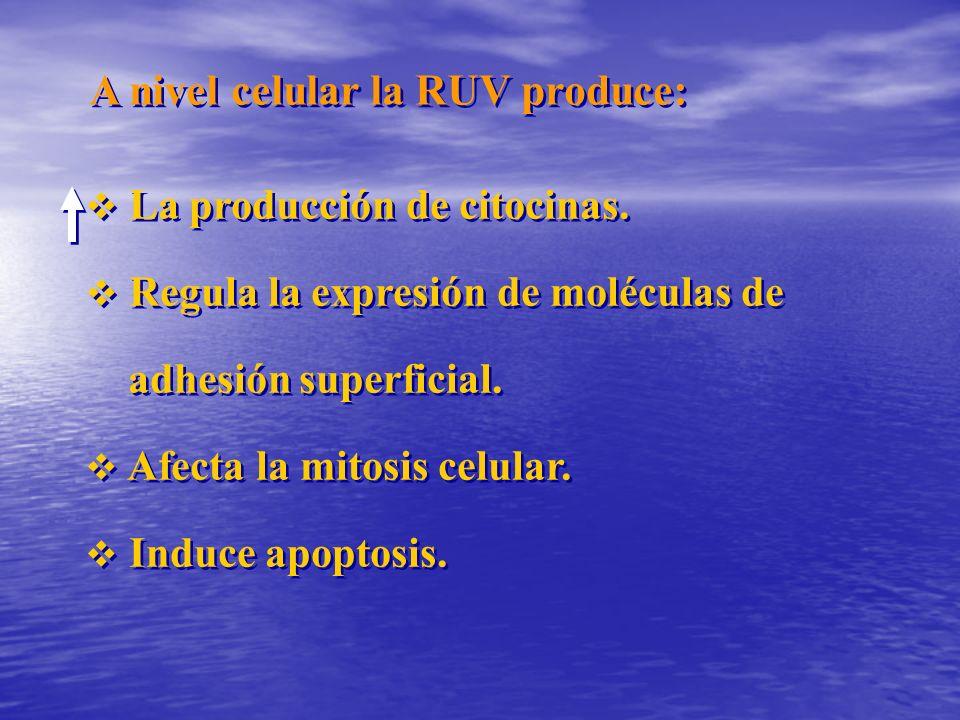 A nivel celular la RUV produce: