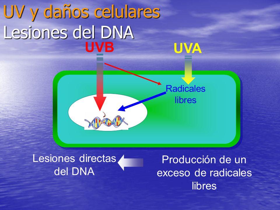UV y daños celulares Lesiones del DNA