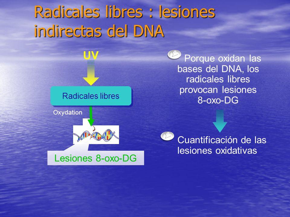Radicales libres : lesiones indirectas del DNA