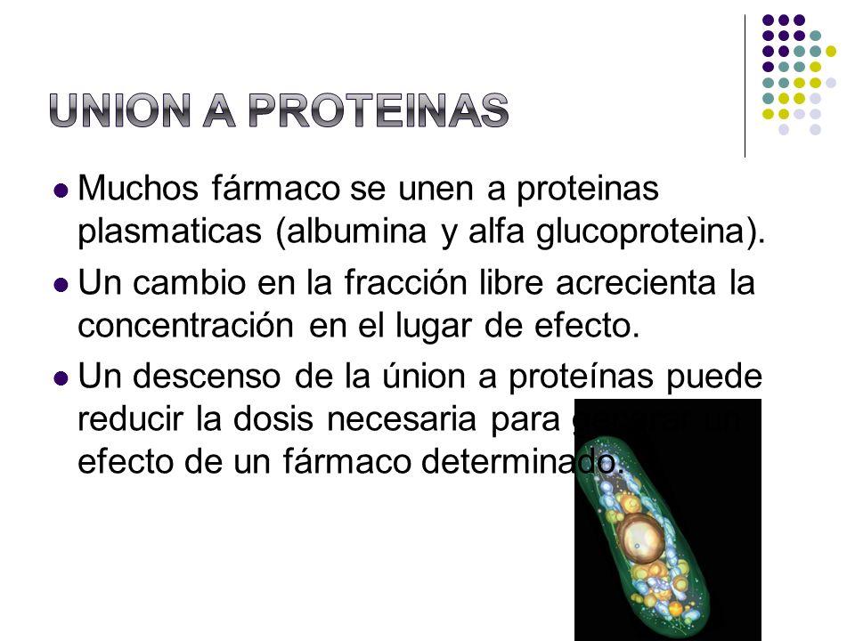 UNION A PROTEINASMuchos fármaco se unen a proteinas plasmaticas (albumina y alfa glucoproteina).
