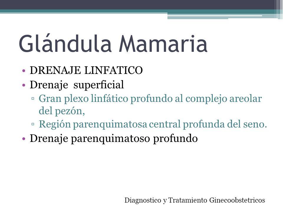 Glándula Mamaria DRENAJE LINFATICO Drenaje superficial