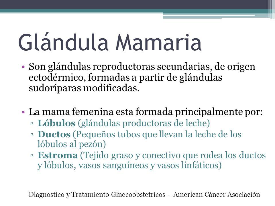 Glándula Mamaria Son glándulas reproductoras secundarias, de origen ectodérmico, formadas a partir de glándulas sudoríparas modificadas.
