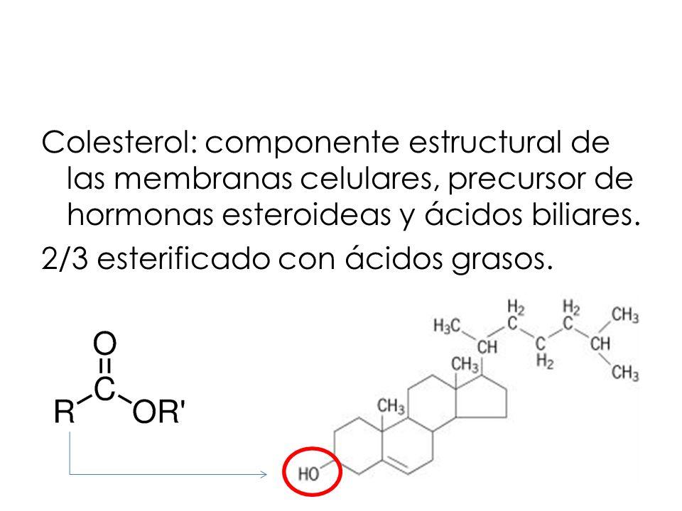 Colesterol: componente estructural de las membranas celulares, precursor de hormonas esteroideas y ácidos biliares.