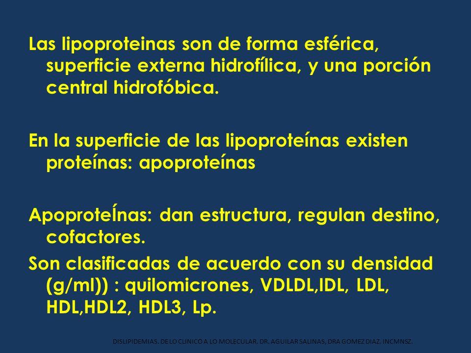 Las lipoproteinas son de forma esférica, superficie externa hidrofílica, y una porción central hidrofóbica. En la superficie de las lipoproteínas existen proteínas: apoproteínas ApoproteÍnas: dan estructura, regulan destino, cofactores. Son clasificadas de acuerdo con su densidad (g/ml)) : quilomicrones, VDLDL,IDL, LDL, HDL,HDL2, HDL3, Lp.