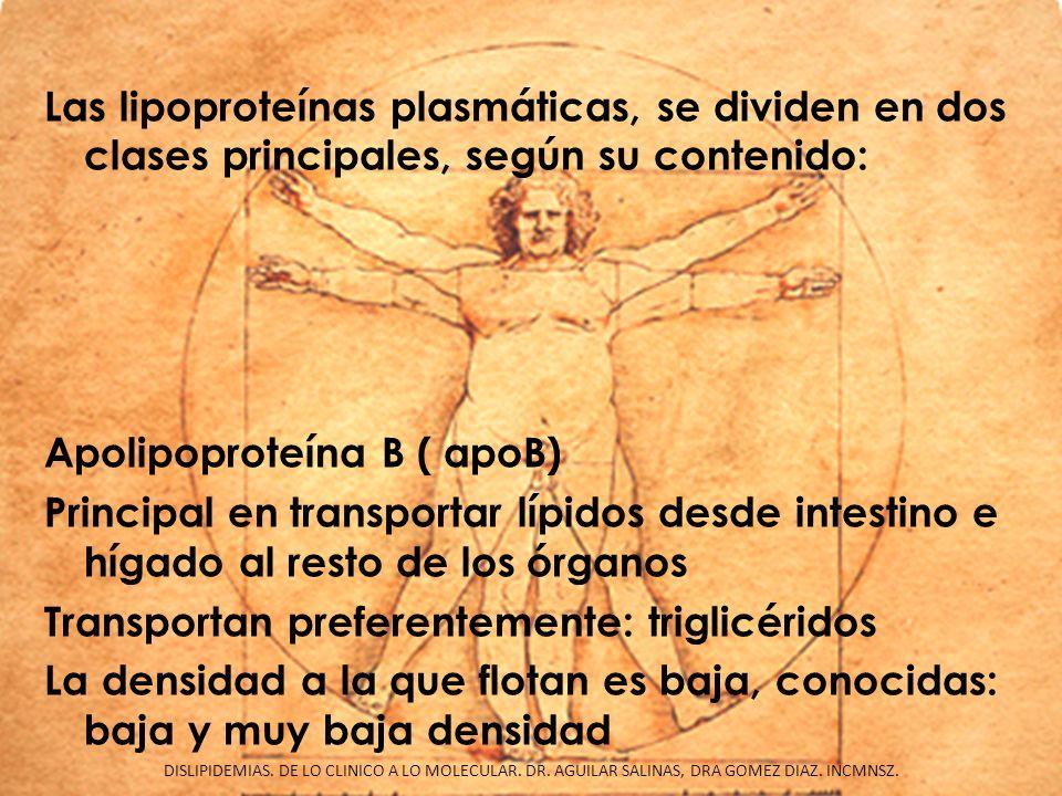 Las lipoproteínas plasmáticas, se dividen en dos clases principales, según su contenido: Apolipoproteína B ( apoB) Principal en transportar lípidos desde intestino e hígado al resto de los órganos Transportan preferentemente: triglicéridos La densidad a la que flotan es baja, conocidas: baja y muy baja densidad