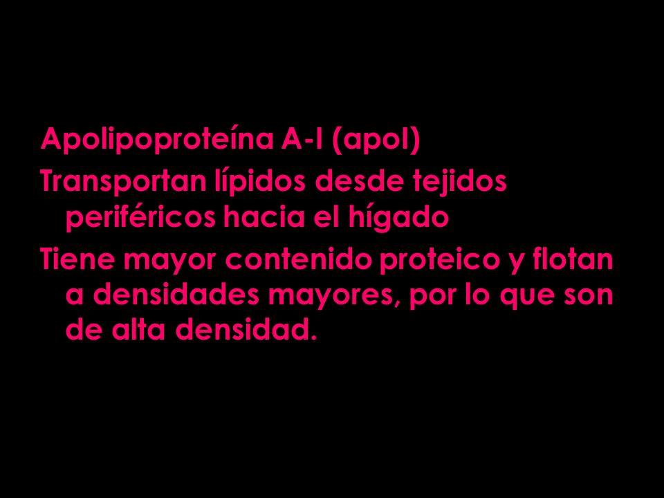 Apolipoproteína A-I (apoI)