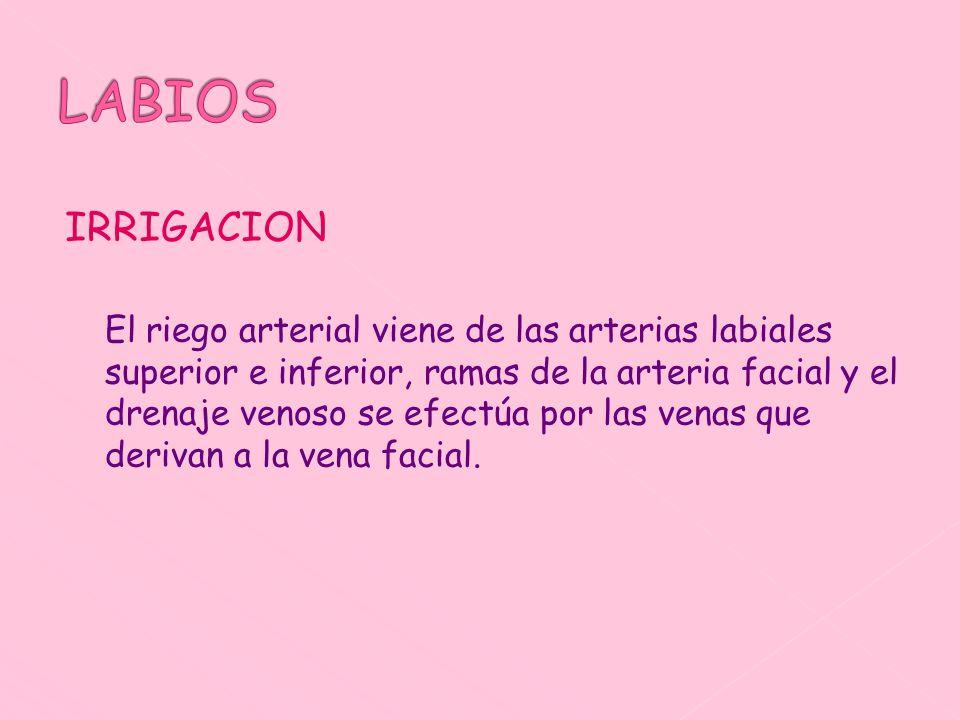 LABIOS IRRIGACION.
