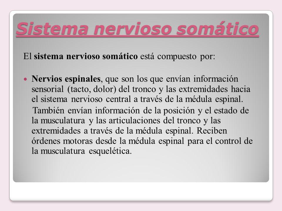 Sistema nervioso somático