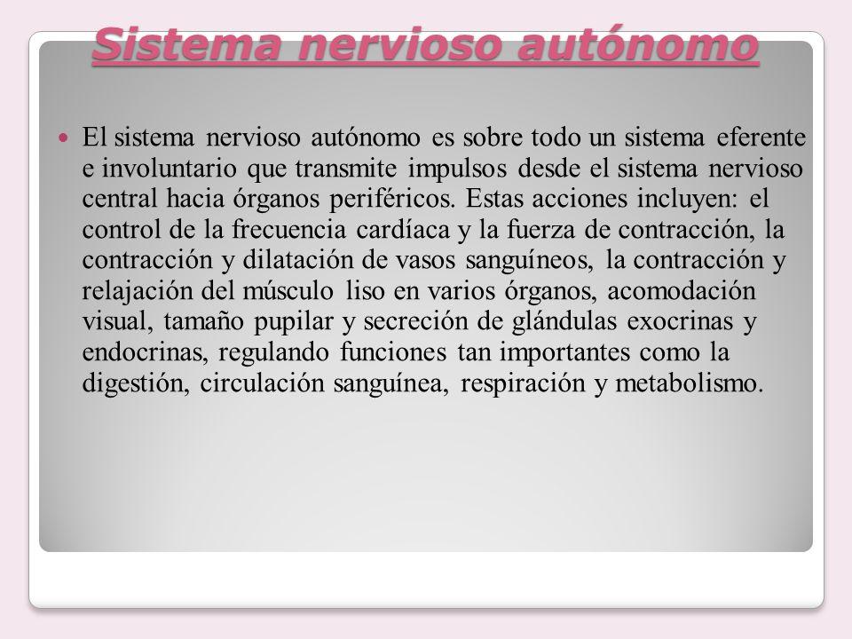 Sistema nervioso autónomo