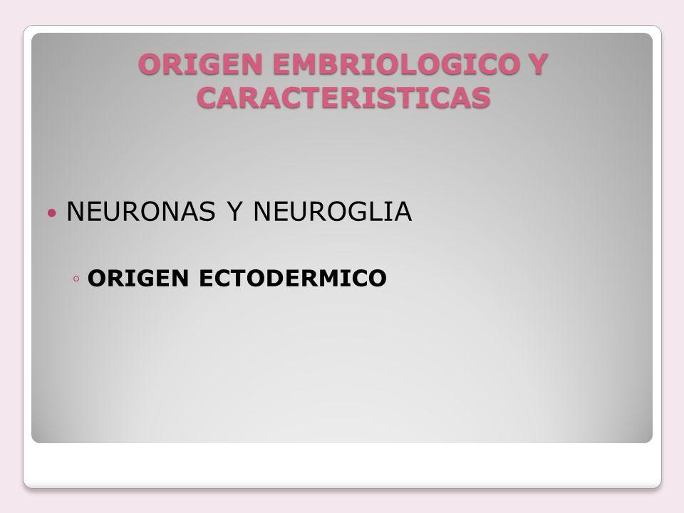 ORIGEN EMBRIOLOGICO Y CARACTERISTICAS