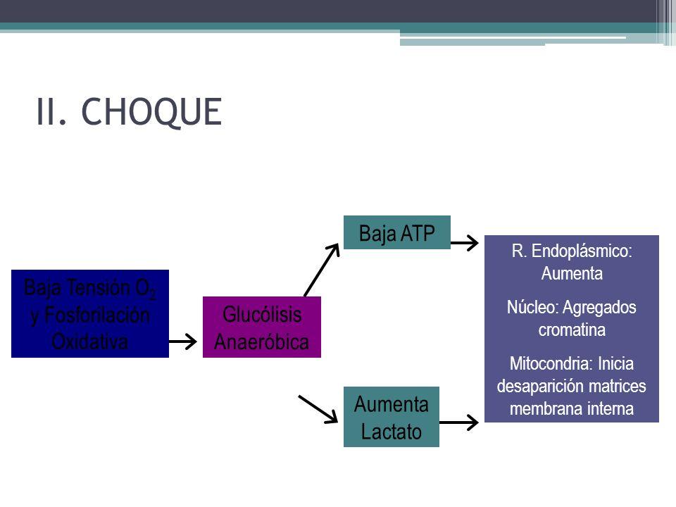 II. CHOQUE Baja ATP Baja Tensión O2 y Fosforilación Oxidativa