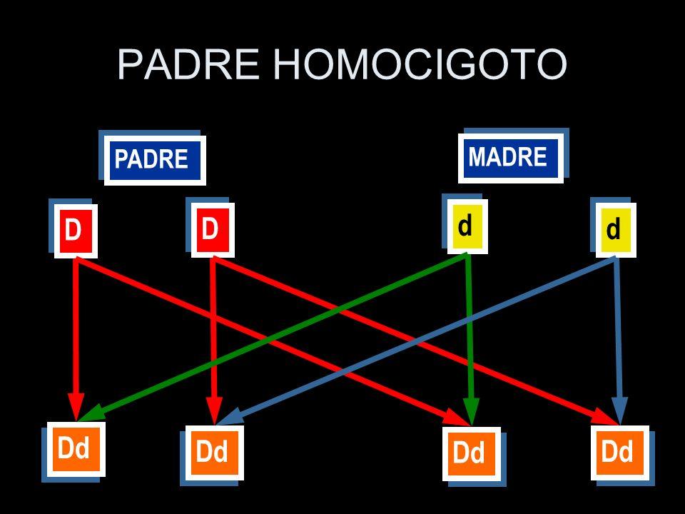 PADRE HOMOCIGOTO d D D d Dd Dd Dd Dd MADRE PADRE