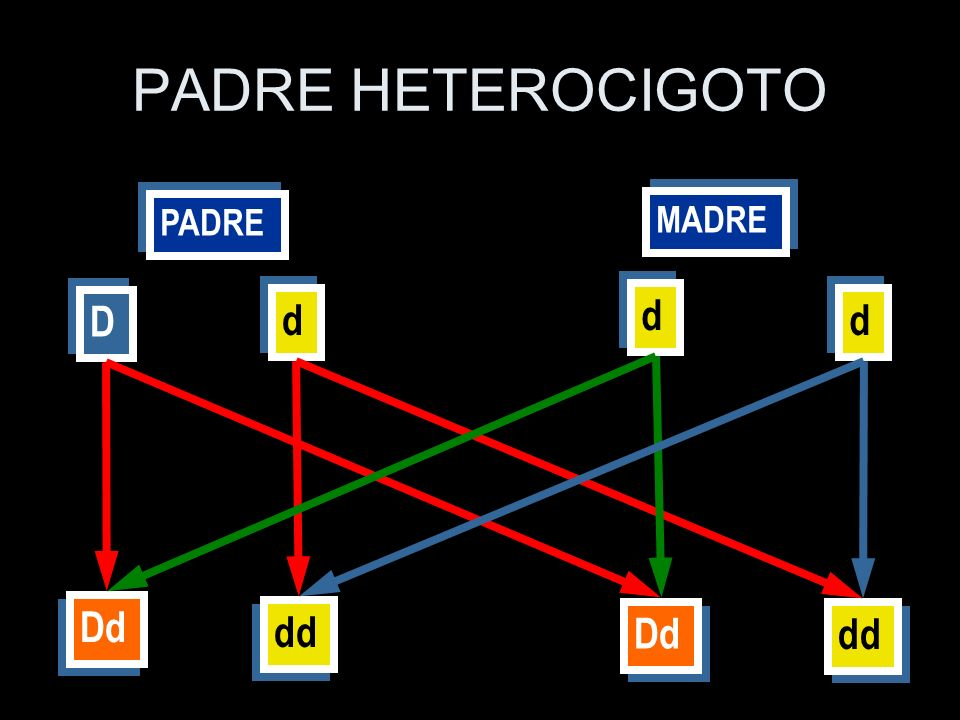 PADRE HETEROCIGOTO d D d d Dd dd Dd dd MADRE PADRE