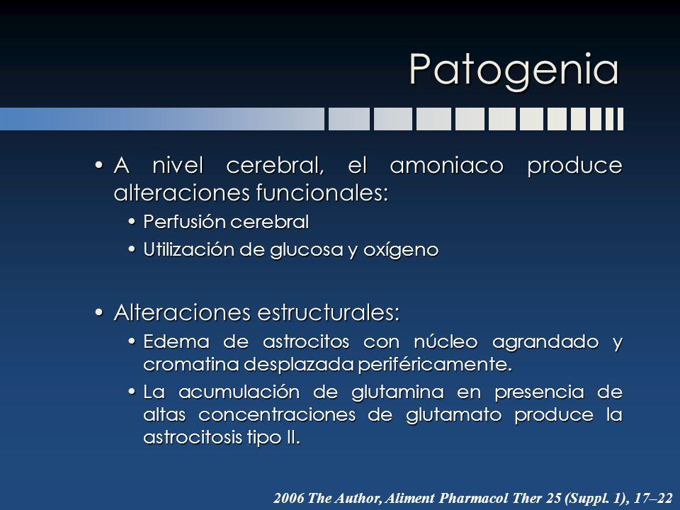 Patogenia A nivel cerebral, el amoniaco produce alteraciones funcionales: Perfusión cerebral. Utilización de glucosa y oxígeno.