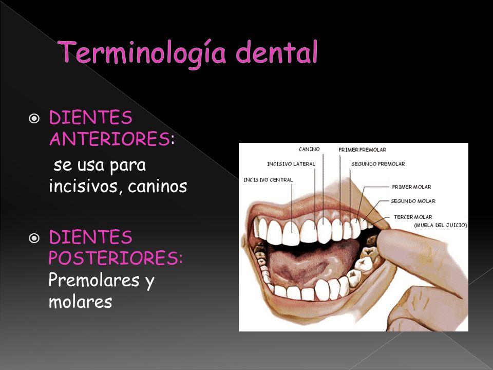 Terminología dental DIENTES ANTERIORES: se usa para incisivos, caninos