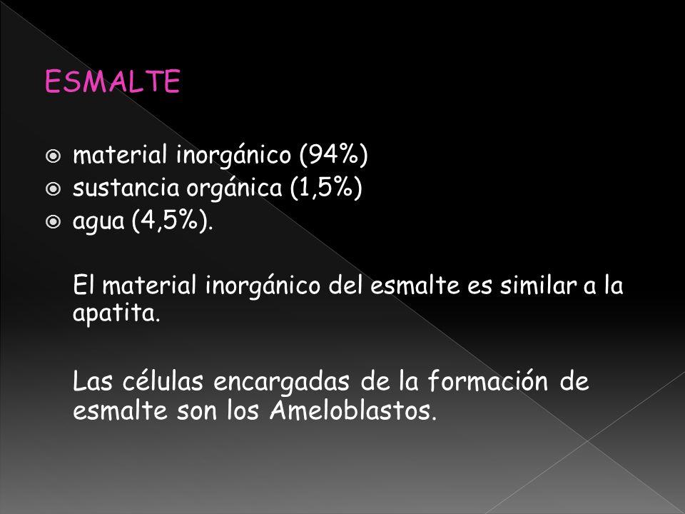ESMALTEmaterial inorgánico (94%) sustancia orgánica (1,5%) agua (4,5%). El material inorgánico del esmalte es similar a la apatita.