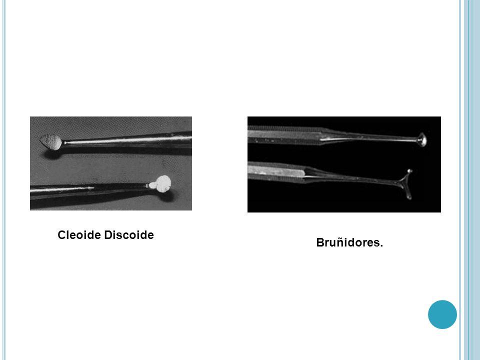 Cleoide Discoide Bruñidores.